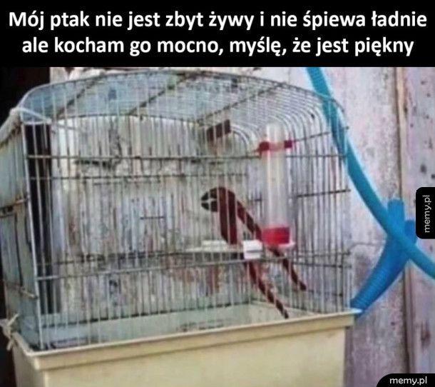 Piękny ptak