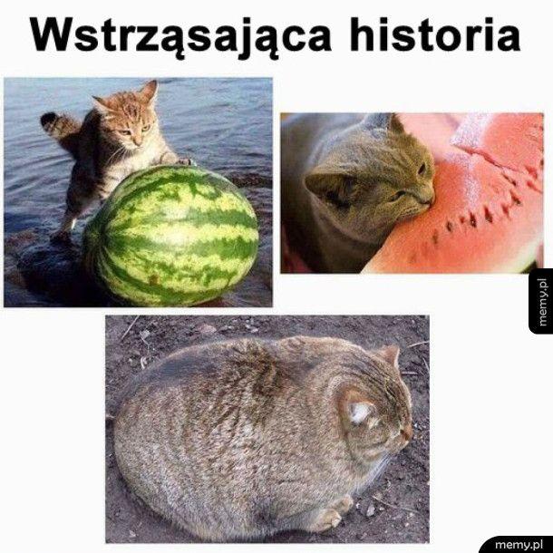 Kot toczący arbuza na plaży
