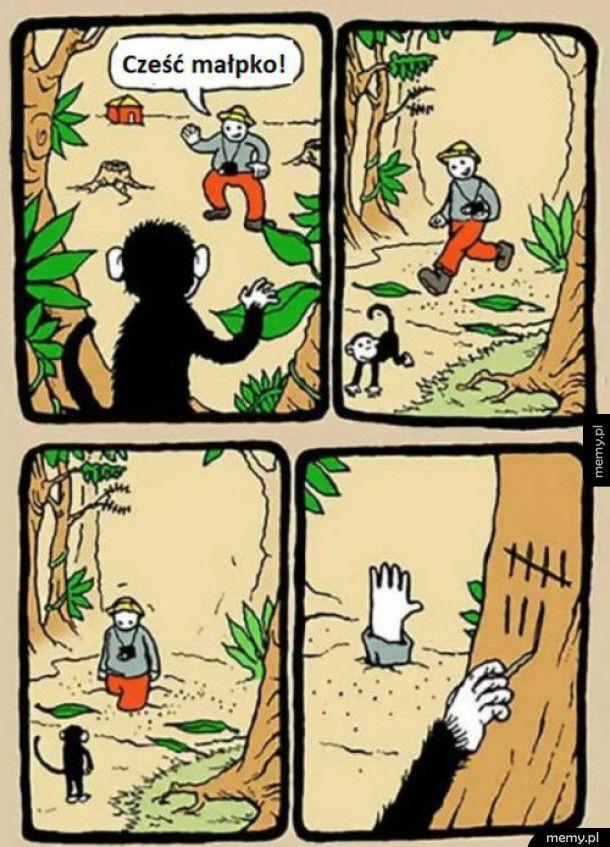 Najfajniejsza małpka w dżungli