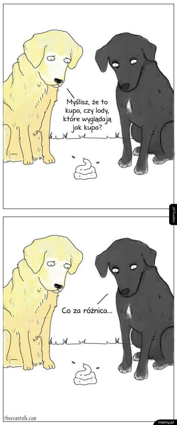 Psia rozkmina