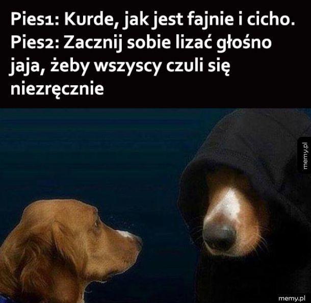 Pieski tak mają