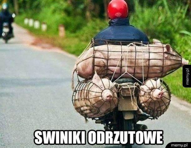 Świniki odrzutowe