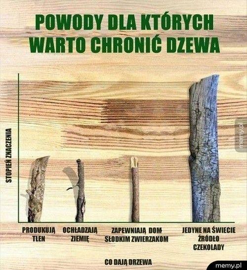 Powody dla których warto chronić drzewa