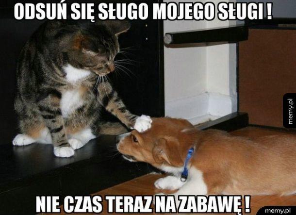 Padnij psie