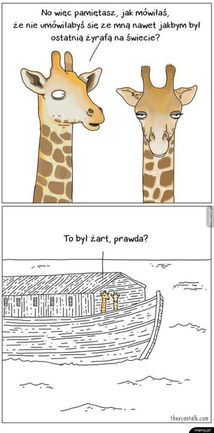 Żyrafa