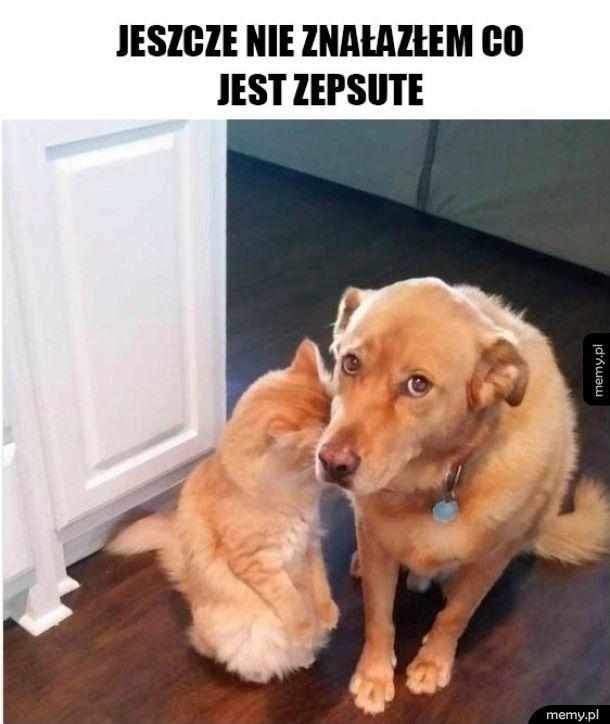 Pies I Kot Memypl