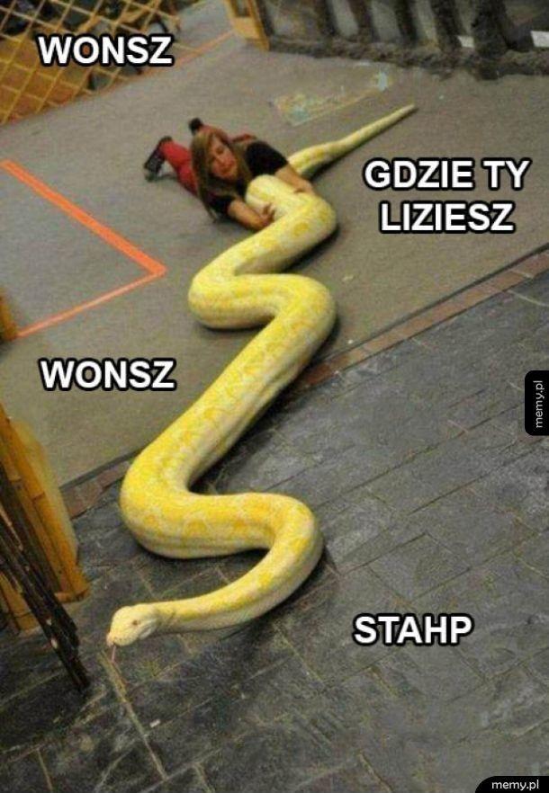 Wonsz