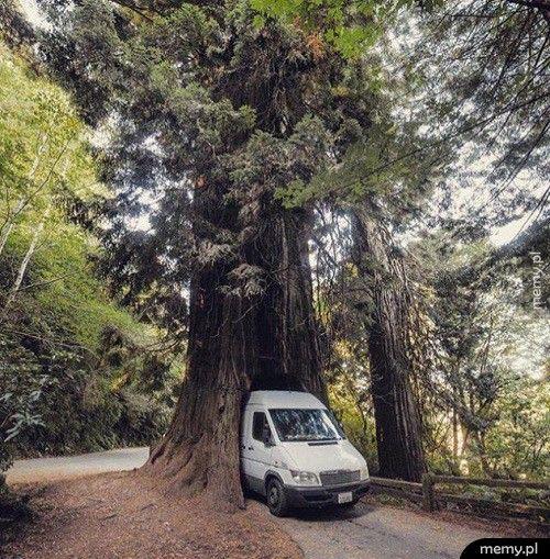 Drzewo na drodze