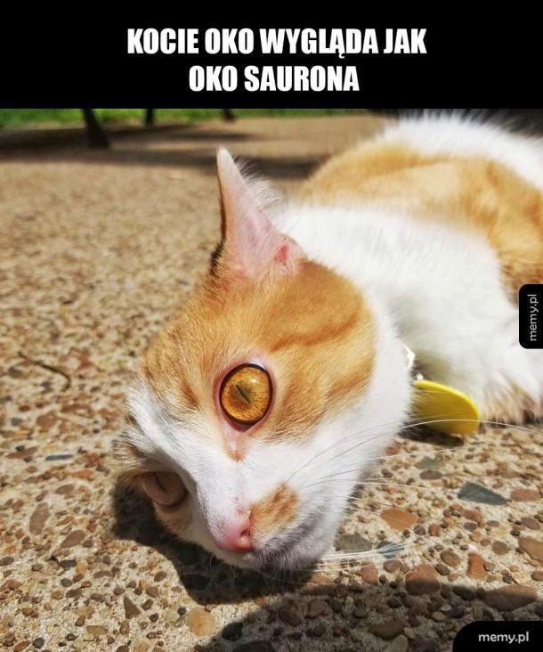 Śliczny koteł