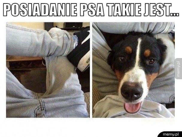 Posiadanie psa takie jest...