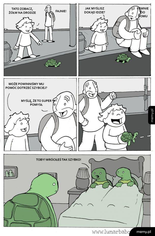 Pomoc dla żółwia