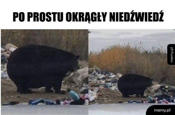 Okrągły niedźwiedź