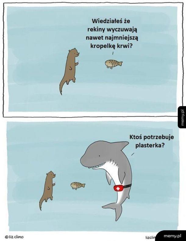 Idealny węch rekinów