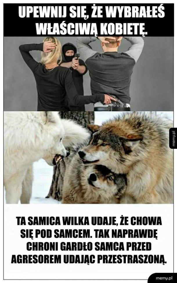 Samica