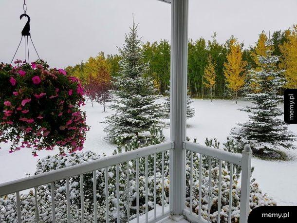 Trzy pory roku naraz