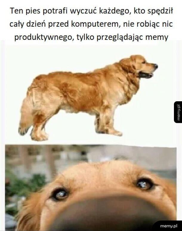 Zdolny pies