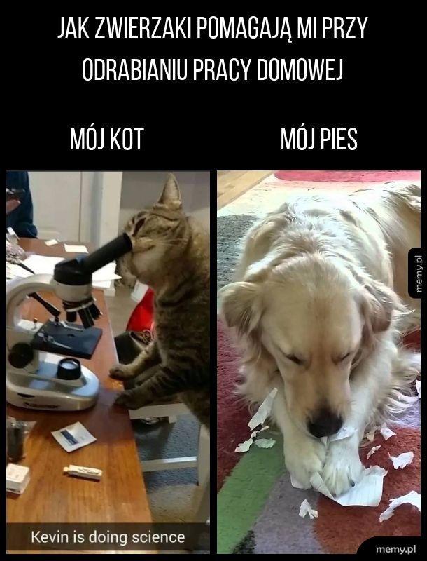 Koty Są Jednak Bardziej Pomocne Memypl