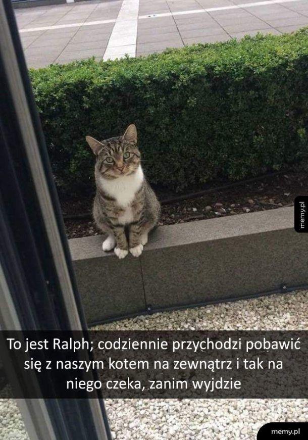 Nawet koty mają lepsze życie towarzyskie niż ja...