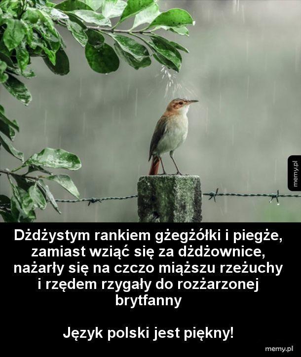 Właśnie za to kocham język polski! :D