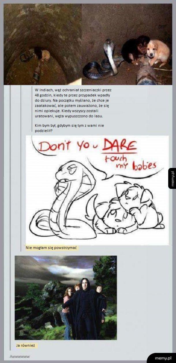 Bohaterski wąż