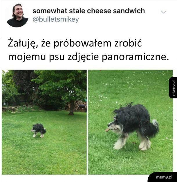 Nigdy nie róbcie zdjęć panoramicznych psu