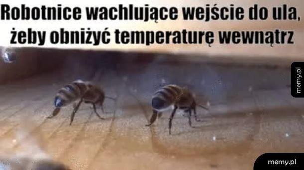 Mądre pszczółki