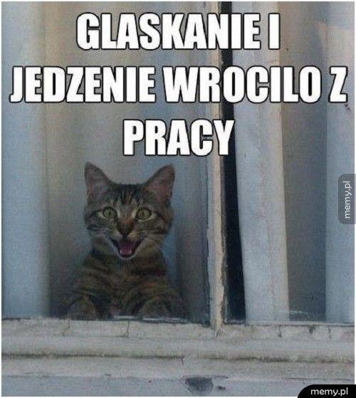 Co myśli twój kot