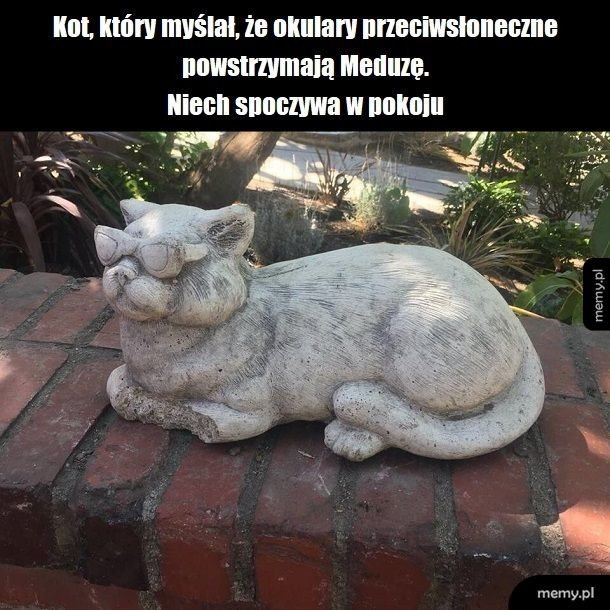 Niemądry kotek