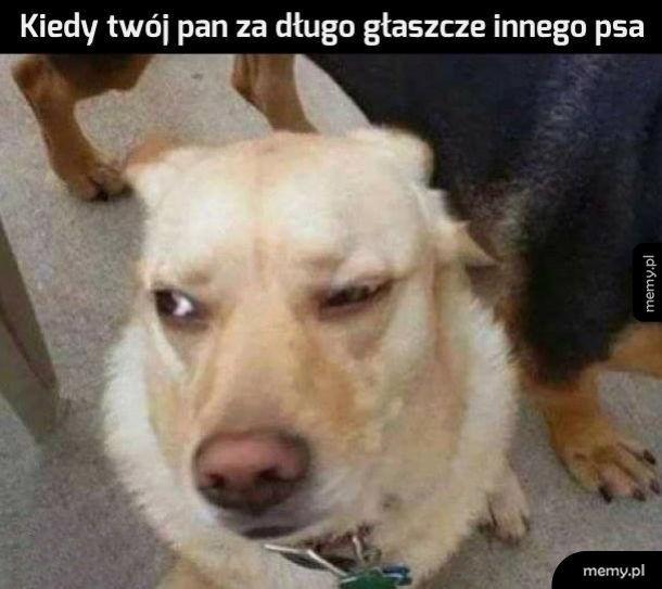 Kiedy twój pan za długo głaszcze innego psa