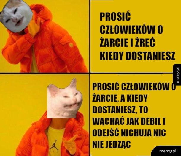 Logika kotów