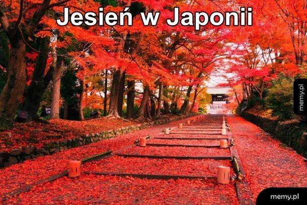 Tak wygląda jesień w Japonii