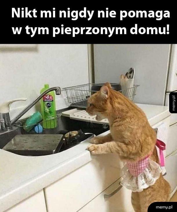 Ciężko spracowany kot