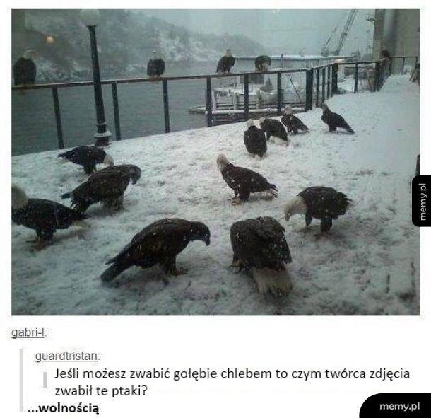 Wabienie ptaków