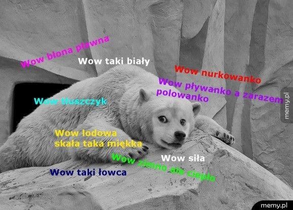 Pieseł polarny