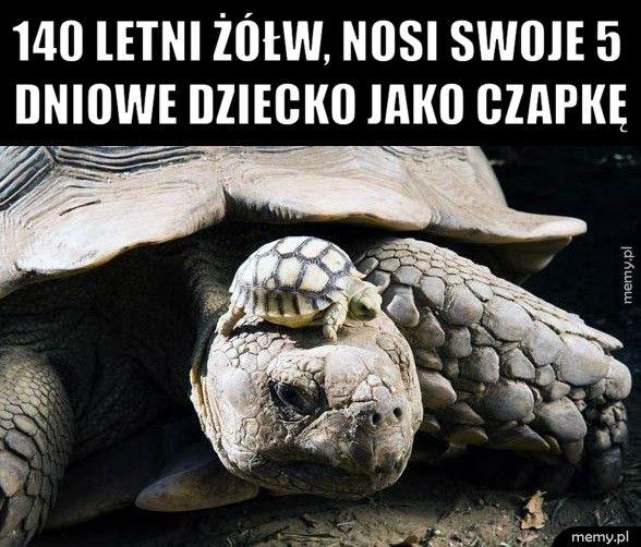 Moda żółwi