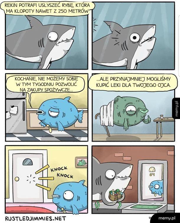 Dobry ziomek rekin