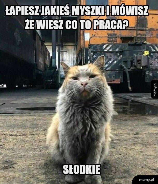 To jest kot pracujący
