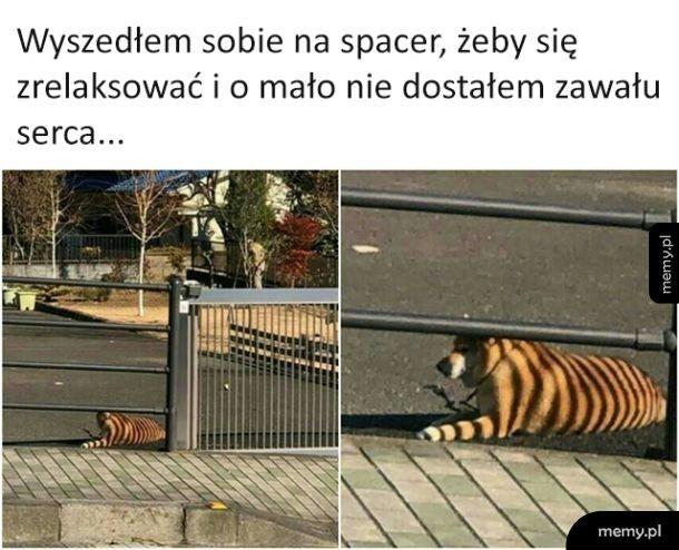 Tygryseł?