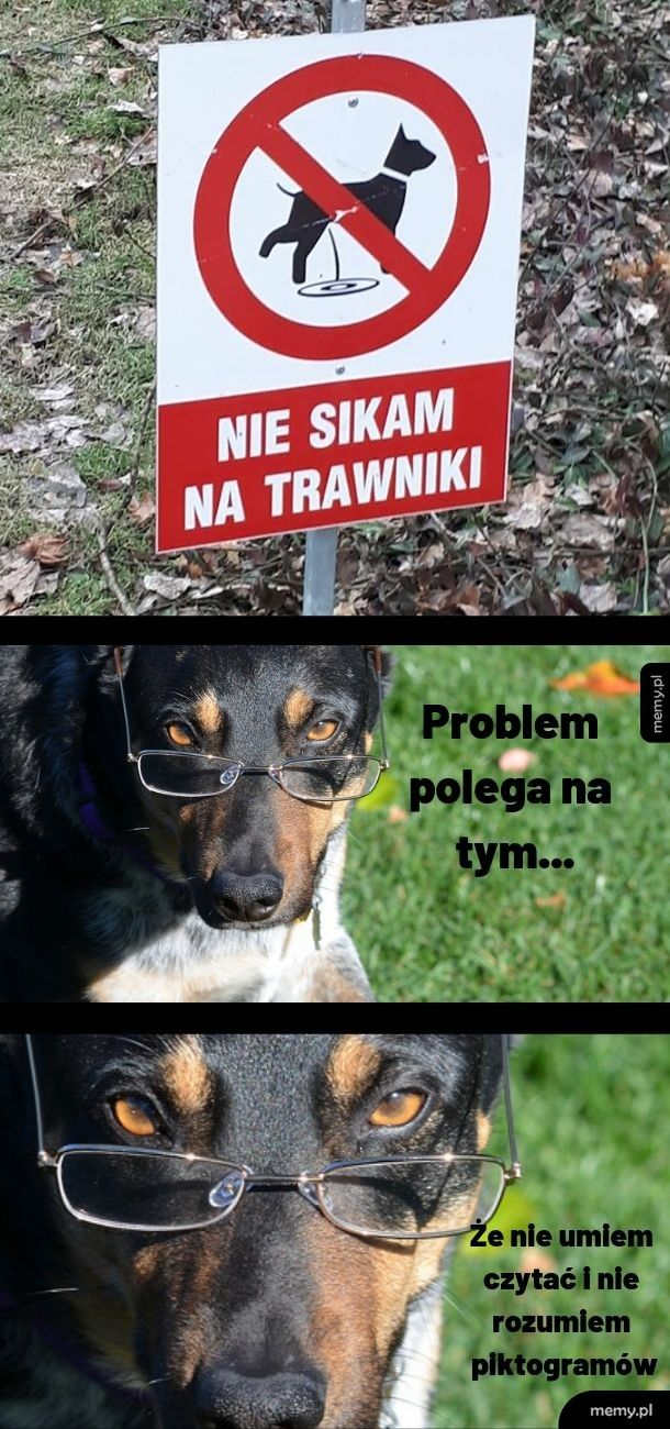 Podobno psy nie potrafią czytać!