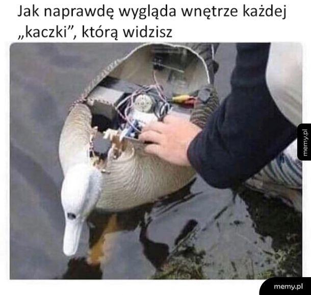 Prawdziwe oblicze kaczek