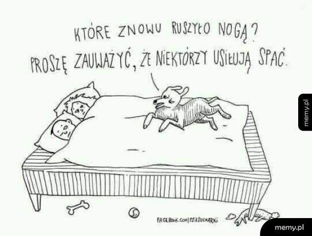 Posiadacze psów rozumieją