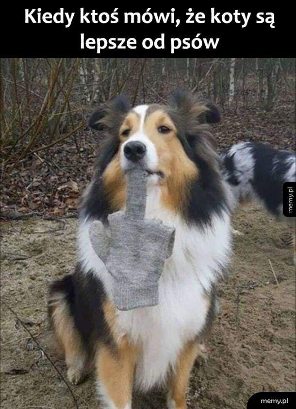 Pies wyjaśnia hejterów