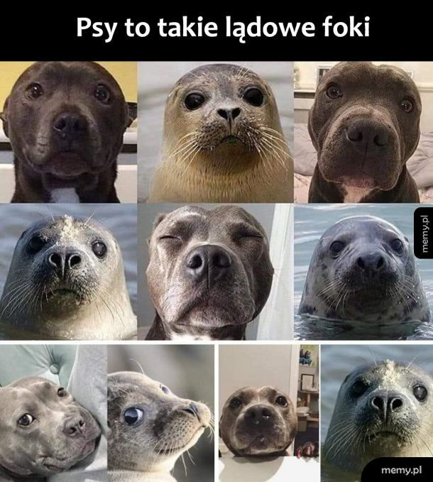 Psy i foki