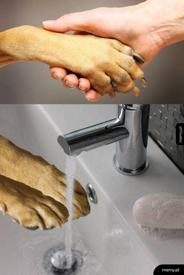 Pamiętaj umyć ręce po kontakcie ze zwierzętami