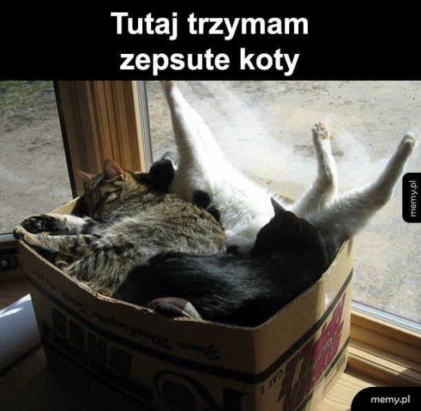 Zepsute koty
