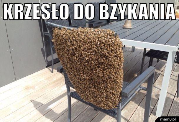 Krzesło do bzykania
