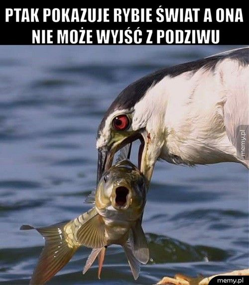 Ptak pokazuje rybie świat a ona nie może wyjść z podziwu
