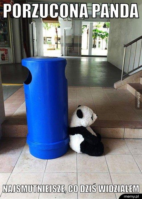 Porzucona panda Najsmutniejsze, co dziś widziałem