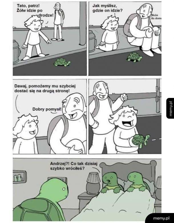 Przygody żółwia Andrzeja