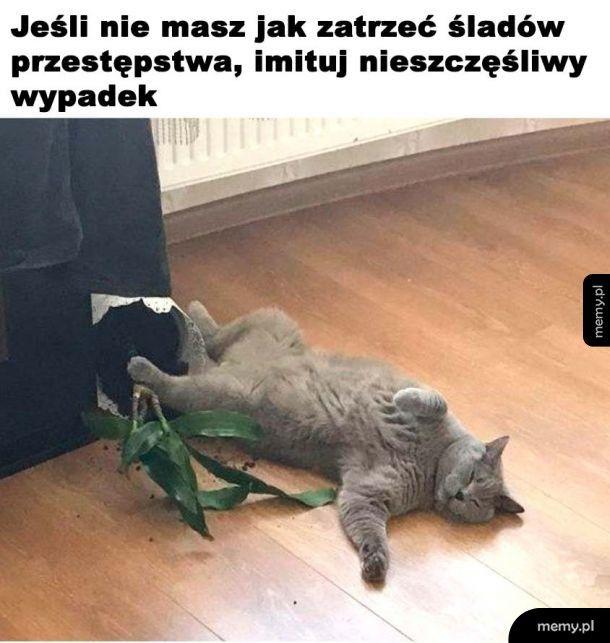 Rada od koteła